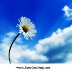flower facing the sun - effortless